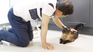 Download 고양이 데꼬오면 몽땅 묶어 놓겠다던 울 아빠... Video