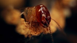Download Amazing World Of A Termite Mound - Wonders of Life w/ Prof Brian Cox - BBC Video