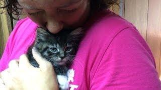 Download Kitten Cuteness Silly Leopard Siamese Momma Cat Video