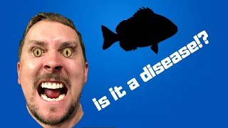 Download This Fish has a disease? Video