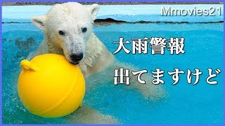 Download 大雨警報発令中 人もまばらな浜松市動物園 Animals at Hamamatsu Zoo Video