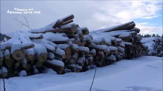 Download Вырубка лесов,Ивантеевка . Video