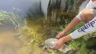 Download Fly River Turtles New Home : Kamp Kenan Bonus Video