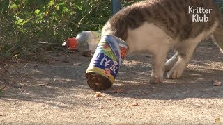 Download Cat Struggles To Eat Because Of A Food Can | Animal in Crisis EP9 Video