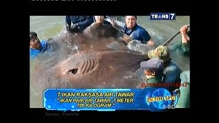 Download On The Spot - 7 Ikan Raksasa Air Tawar Video