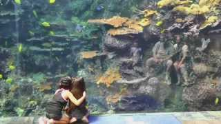 Download Atlanta Georgia Aquarium World's Largest Video