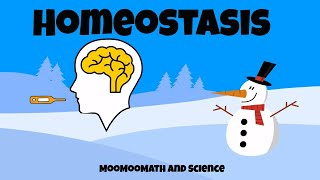 Download Why is homeostasis important? Video
