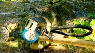 Download Crocodile Bite Test! | Deadly 60 | BBC Earth Video