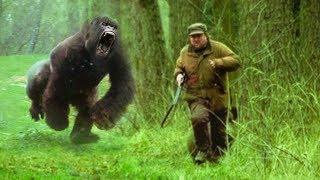Download Animals That Took REVENGE On Humans! Video