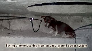 Download Saving a homeless dog from an underground sewer system. Please share. Video