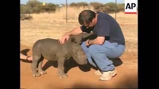 Download Three rare baby rhinos arrive at animal sanctuary Video