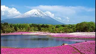 Download [HD]Mt.Fuji Lawn Cherry Blossom 富士芝桜まつり 世界遺産に登録の富士山(Fuji World Heritage)花の名所 花見頃 Video