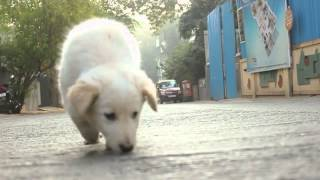 Download The Life Of A Street Dog Video