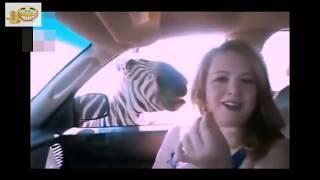 Download Stupid Humans vs Smart Wild Animals 6 Video