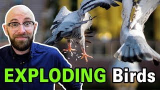 Download Does Dried Rice or Alka-Seltzer Really Cause Birds' Stomachs to Explode? Video