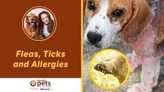 Download Dr. Becker's Facebook Live Presentation on Fleas, Ticks and Allergies Video
