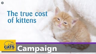 Download The true cost of kittens Video