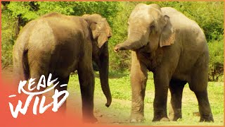 Download Austin Stevens Adventures - Elephant Charge [Documentary Series] | Real Wild Video