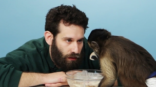 Download Stoners Get Surprised With A Monkey & Eat Banana Splits Video