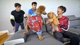 Download OUR DOG HAS A NEW GIRLFRIEND! Video