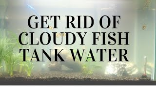 Download How to get rid of cloudy fish tank water Video