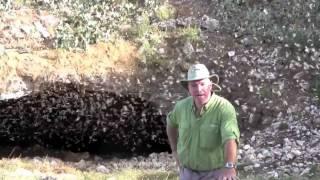 Download Bracken Bat Cave Emergence Video