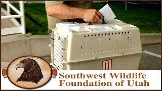 Download Have Birds Will Travel | Wildlife Ambassadors Video