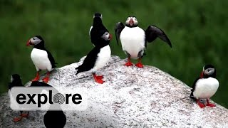 Download Discover the Puffins of Seal Island, Maine Video
