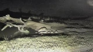Download Djuma: Tingana male leopard shows up with Hosana not far behind - 02:09 - 07/17/18 Video