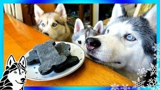 Download DIY DENTAL DOG TREATS | DIY Dog Treats | Snow Dogs Snacks 64 | Dental Chews Video
