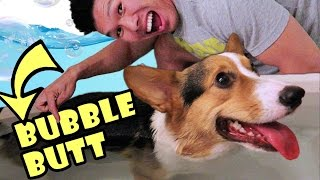 Download DO CORGI DOG BUTTS FLOAT?! - Life After College: Ep. 473 Video