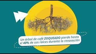 Download Fertilización para Zoca del Café, Tips del Profesor Yarumo Video