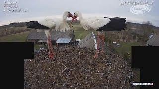 Download Kamera IP: Gniazdo Bocianie pod Sokółką [NA ŻYWO] | IP Camera: Stork's nest [LIVE] Video