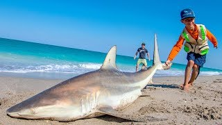 Download EPIC Day of Beach Fishing for Sharks and Pompano   Fan Episode - 4K Video