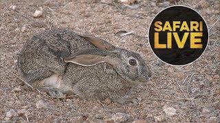 Download safariLIVE - Sunset Safari - August 13, 2018 Video