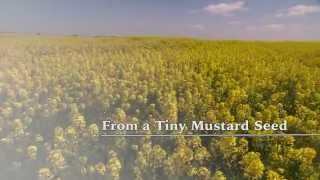 Download From a Tiny Mustard Seed Video