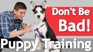 Download How to Train your Dog to BE GOOD in the HOUSE! Video