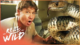 Download The Second Deadliest Snake In The World! | Wild Things Shorts Video