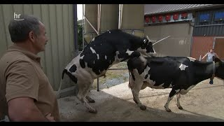 Download Der Milchbauer vom Elkenhof | hessenreporter Video