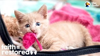 Download Woman Rescues Paralyzed Kittens And Finds Them Homes   The Dodo Faith = Restored Video