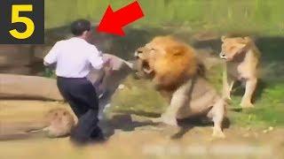 Download Top 5 DUMBEST Zoo Guests Video