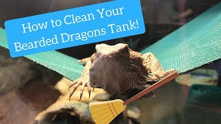 Download How I Clean My Bearded Dragons Tank! Video