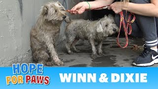 Download Two dogs in the sewer cried for help until someone heard them!!! Video