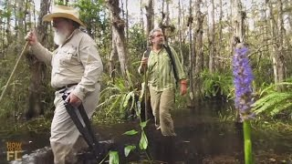 Download How to Do a Swamp Walk with Photographer Clyde Butcher Video