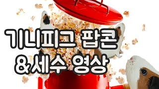 Download 기니피그 팝콘! 팔딱팔딱 Video
