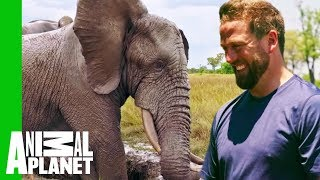 Download Jabu The Elephant Gets A Life-Changing Leg Brace | Extended Cut | Dodo Heroes Video