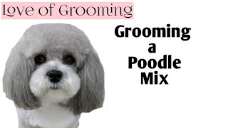 Download Grooming a Poodle Mix | Time Lapsed Dog Grooming Video
