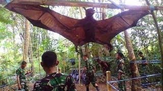 Download GIANT BAT CAPTURED, WHAT IS IT? Video