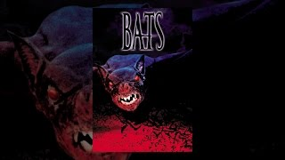 Download Bats Video