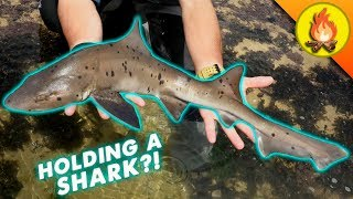 Download 2018's MOST EPIC Animal Catch! Video